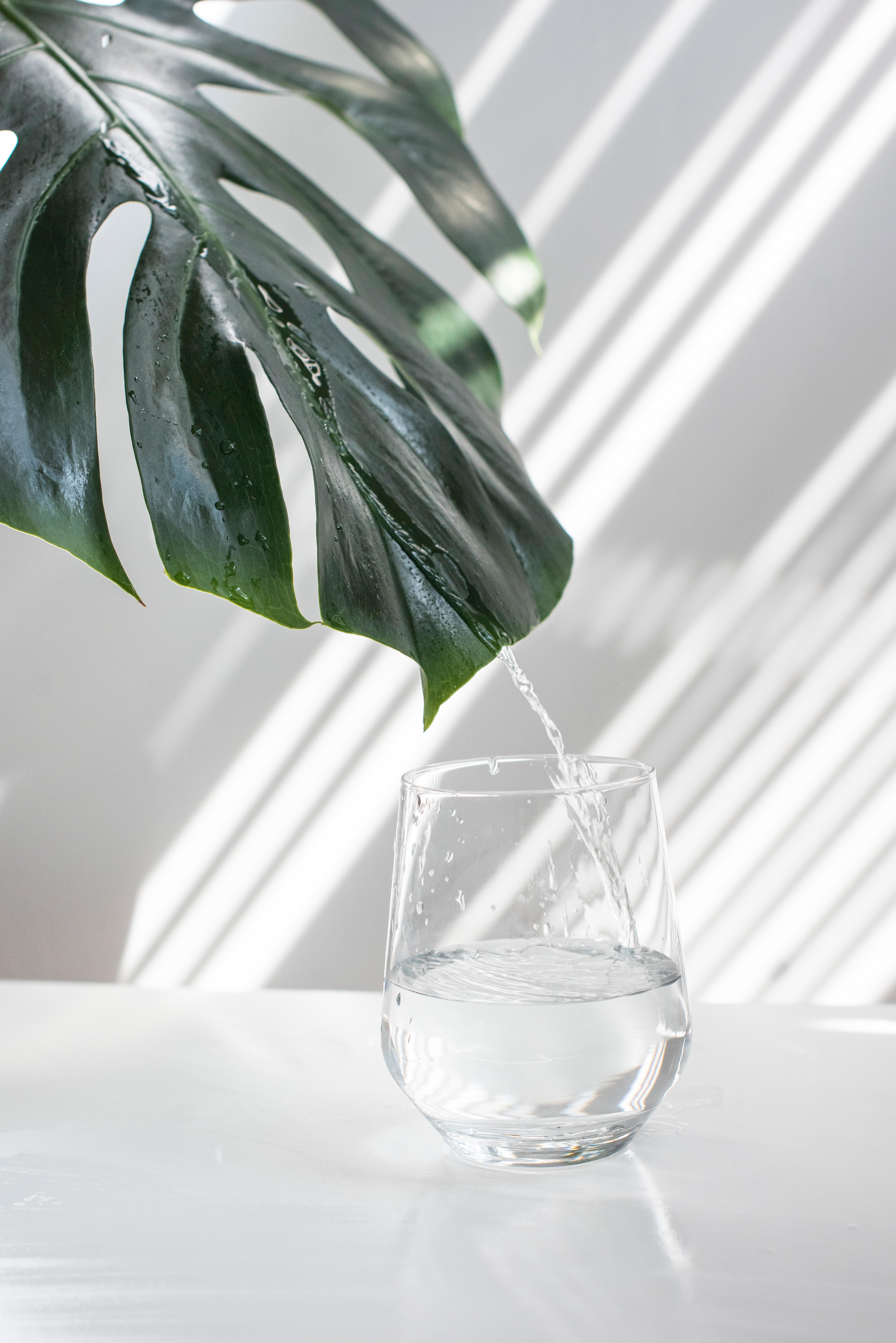 Can Fridge Filters Remove Fluoride?